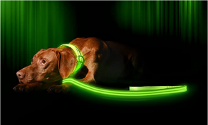 Illumiseen LED Dog Leash - USB Rechargeable - Available in 6 Colors & 2 Sizes