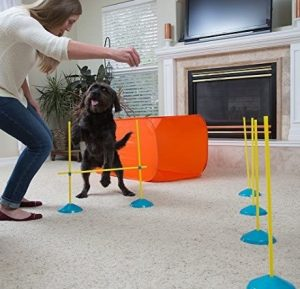 Person trainin a black puppy using agility complex at home