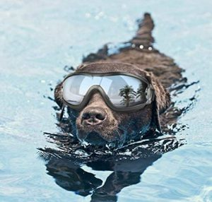 Dog wearing goggles swims in the water