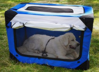 large white dog laying in the soft crate