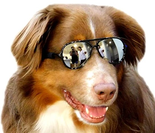 G010 Dog Pet Aviator Sunglasses Goggle For Photoshoot Prop Costume