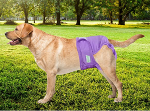 wegreeco Washable Female Dog Diapers