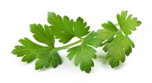 Feed Parsley to Your Dog
