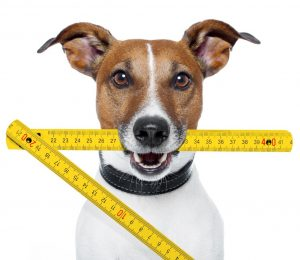 Guide to Dog Measurement