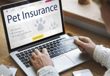 Person filling the online pet insurance quote form
